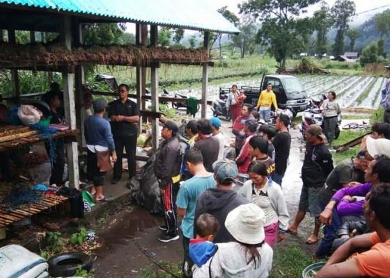Nusabali.com - keringkan-bawang-warga-songan-tewas-kesetrum