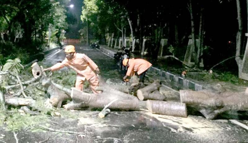 www.nusabali.com-pohon-tumbang-di-timur-taman-pecangakan-timpa-motor