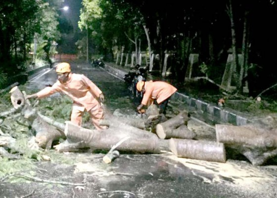 Nusabali.com - pohon-tumbang-di-timur-taman-pecangakan-timpa-motor