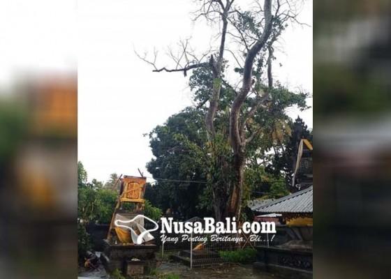Nusabali.com - pohon-keramat-di-pura-puseh-desa-adat-bengkala-tumbang-hancurkan-palinggih