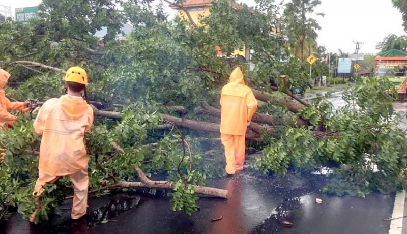 www.nusabali.com-hujan-1-jam-dua-pohon-tumbang-di-jalan-umum-denpasar-gilimanuk
