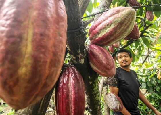 Nusabali.com - kemenperin-pacu-nilai-tambah-kakao-dan-kopi