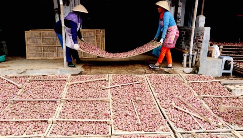 www.nusabali.com-produksi-bawang-merah-dan-cabai-ditarget-naik-7