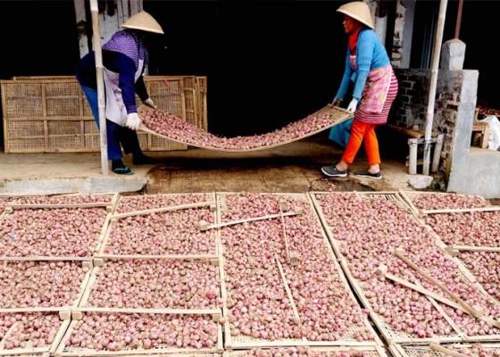 Nusabali.com - produksi-bawang-merah-dan-cabai-ditarget-naik-7