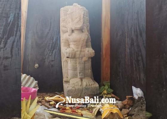 Nusabali.com - tetap-utuh-berdiri-walau-ditimpa-pohon-kuanji-yang-berusia-ratusan-tahun