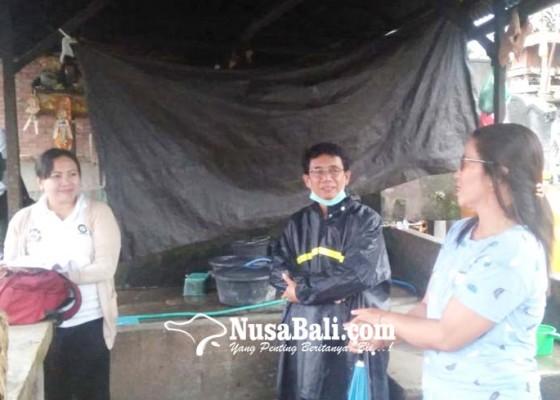 Nusabali.com - jelang-galungan-rumah-jagal-di-buleleng-dipantau-ketat