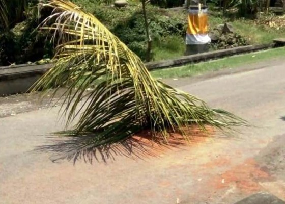 Nusabali.com - jalan-berlubang-ditutup-pelepah-pohon-kelapa