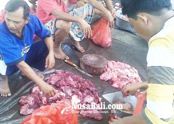 Nusabali.com - pembelian-kebo-dari-hasil-jimpitan