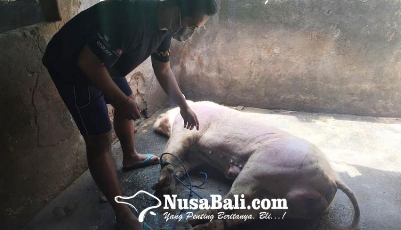 www.nusabali.com-kearifan-lokal-nyelengin-terancam-lenyap