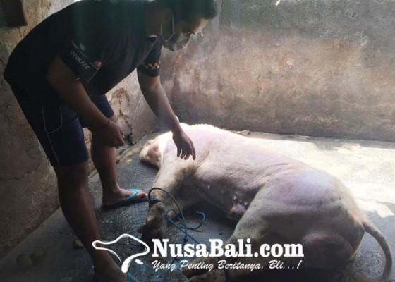 Nusabali.com - kearifan-lokal-nyelengin-terancam-lenyap