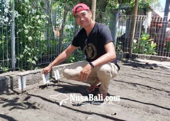 Nusabali.com - populasi-penyu-meningkat-tapi-dihantui-pencemaran-lingkungan