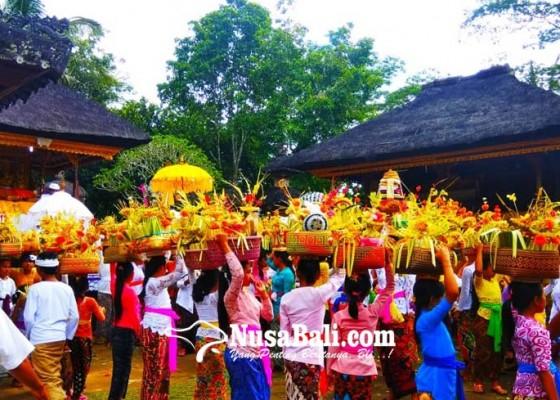 Nusabali.com - mapujewit-ritual-cegah-serangan-hama-padi