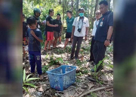 Nusabali.com - pemancing-temukan-orok-membusuk-di-sungai