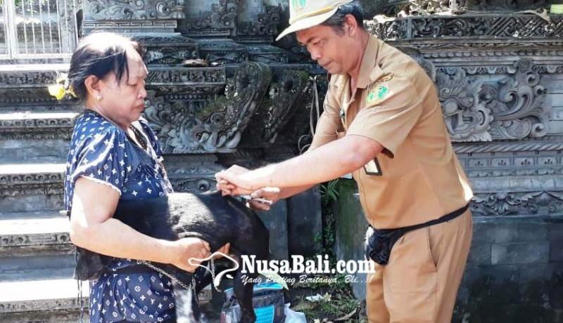 www.nusabali.com-anjing-rabies-serang-3-orang-sekeluarga