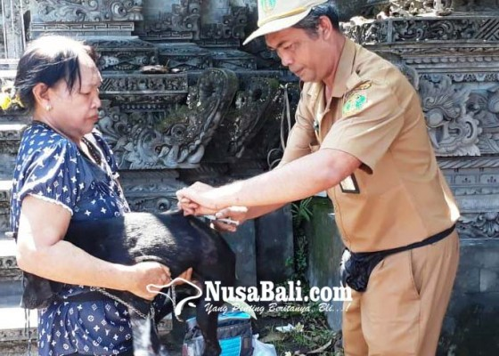 Nusabali.com - anjing-rabies-serang-3-orang-sekeluarga