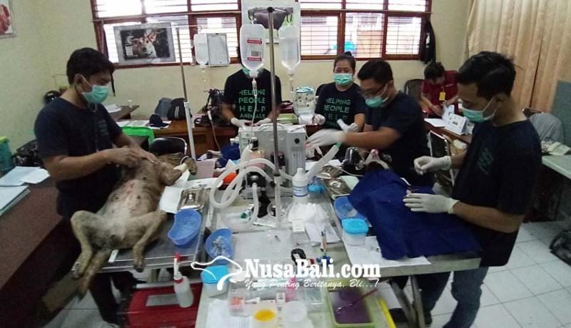 www.nusabali.com-distan-gelar-vaksinasi-sterilisasi-dan-kastrasi-gratis