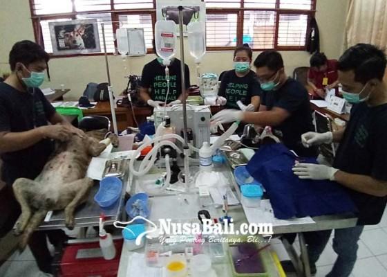 Nusabali.com - distan-gelar-vaksinasi-sterilisasi-dan-kastrasi-gratis