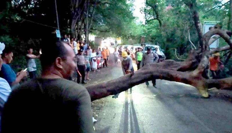 www.nusabali.com-pohon-tumbang-macetkan-jalur-objek-wisata-amed