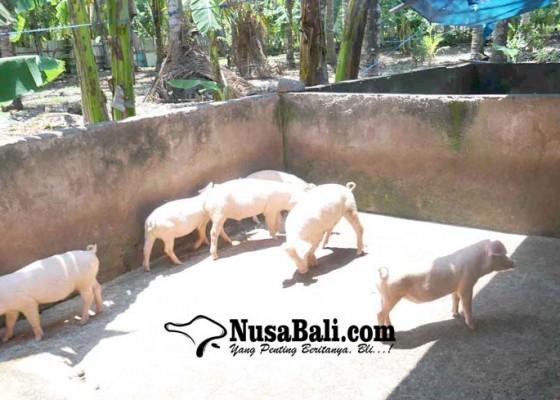 Nusabali.com - dinas-pertanian-data-135-babi-mati