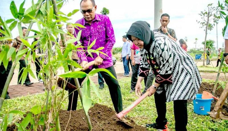 www.nusabali.com-adi-wiryatama-boyong-400-pohon-bambu-ke-surabaya
