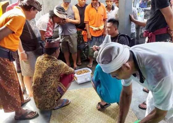 Nusabali.com - pencuri-kembalikan-33-pucuk-bunga-emas