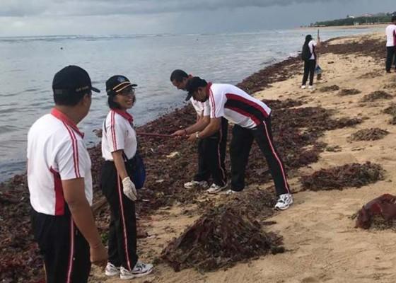 Nusabali.com - sampah-rumput-laut-penuhi-pantai-peninsula