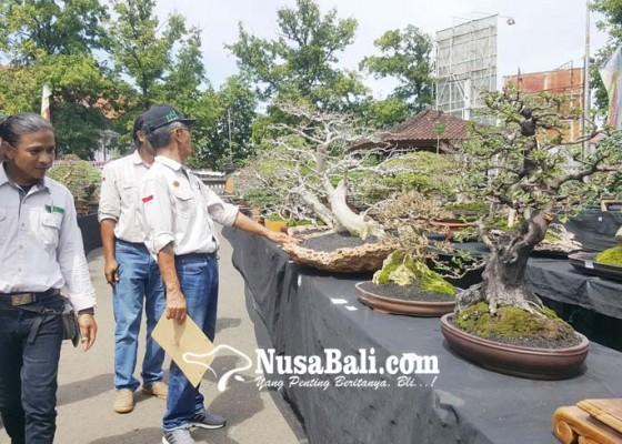 Nusabali.com - 350-bonsai-adu-cantik-di-buleleng