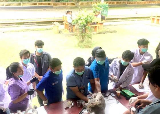 Nusabali.com - pusat-penelitian-satwa-primata-unud-gelar-vasektomi-kera-di-alas-kedaton