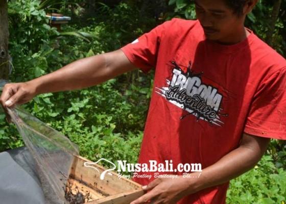 Nusabali.com - manfaatkan-pekarangan-berbudidaya-lebah-kela