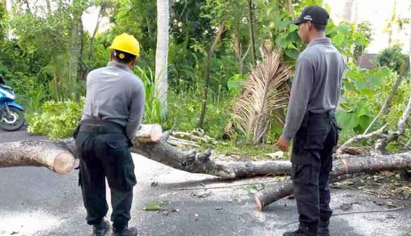 www.nusabali.com-pohon-tumbang-melintang-di-jalan