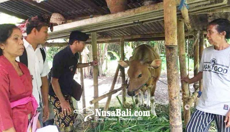 www.nusabali.com-desa-muncan-punya-program-bantuan-bibit-sapi