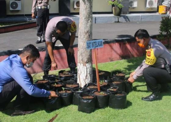 Nusabali.com - polres-contohi-pemanfaatan-pekarangan