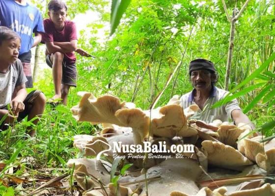 Nusabali.com - oong-raksasa-muncul-di-desa-sebudi