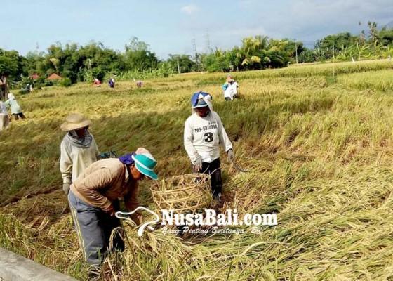 Nusabali.com - petani-buleleng-jangan-jual-hasil-panen-ke-luar-daerah
