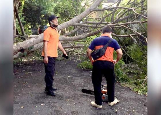 Nusabali.com - hujan-disertai-angin-pohon-tumbang-timpa-rumah