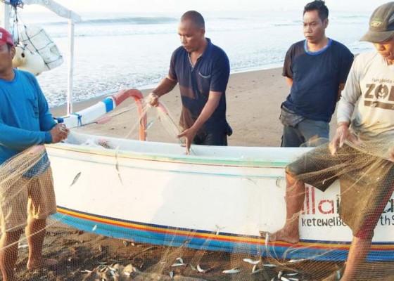 Nusabali.com - tangkapan-melimpah-nelayan-ketewel-semringah