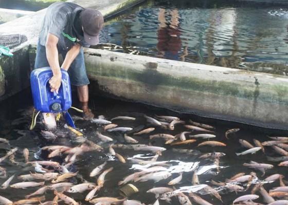 Nusabali.com - industri-pengalengan-ikan-tumbuh
