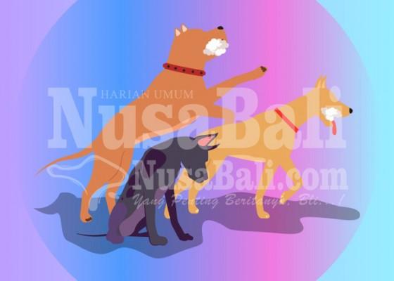 Nusabali.com - 2020-menuju-bali-bebas-rabies