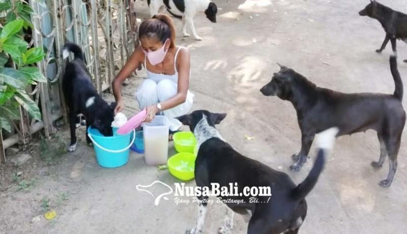 www.nusabali.com-elya-eliana-pemberi-makan-anjing-liar-kawasan-sanur