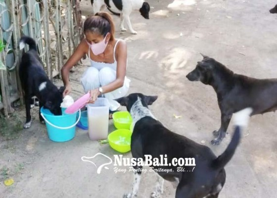 Nusabali.com - elya-eliana-pemberi-makan-anjing-liar-kawasan-sanur