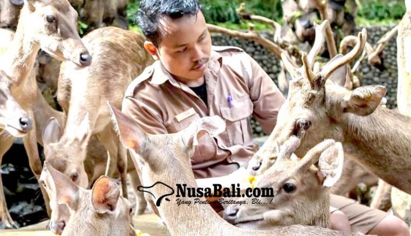 www.nusabali.com-tutup-bali-zoo-utamakan-rawat-satwa