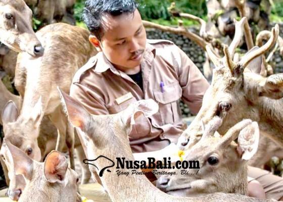 Nusabali.com - tutup-bali-zoo-utamakan-rawat-satwa