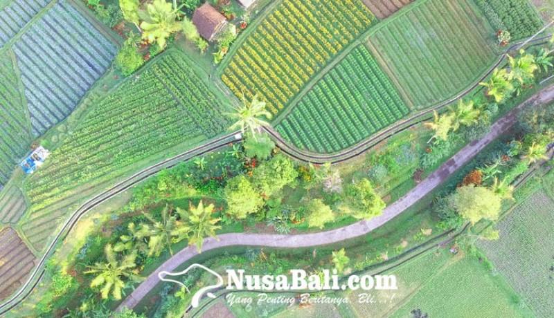 www.nusabali.com-belajar-dari-tri-hita-karana-dan-subak-abian-di-bali