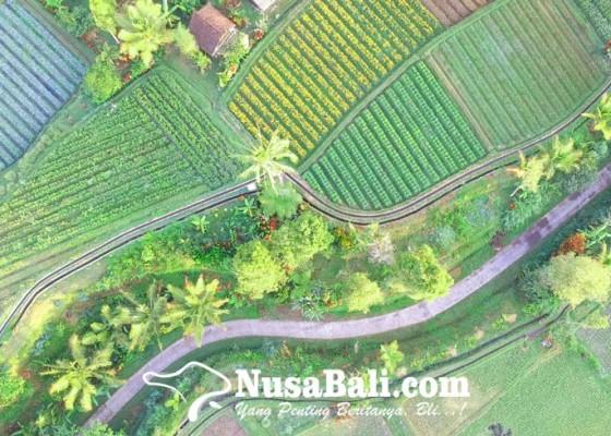 Nusabali.com - belajar-dari-tri-hita-karana-dan-subak-abian-di-bali