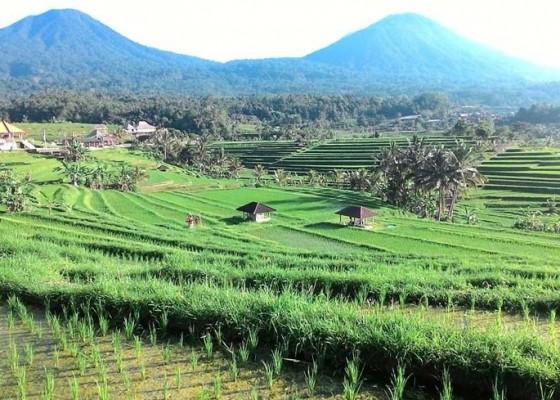 Nusabali.com - petani-dilarang-bekerja-yang-melanggar-wajib-ngaturang-guru-piduka