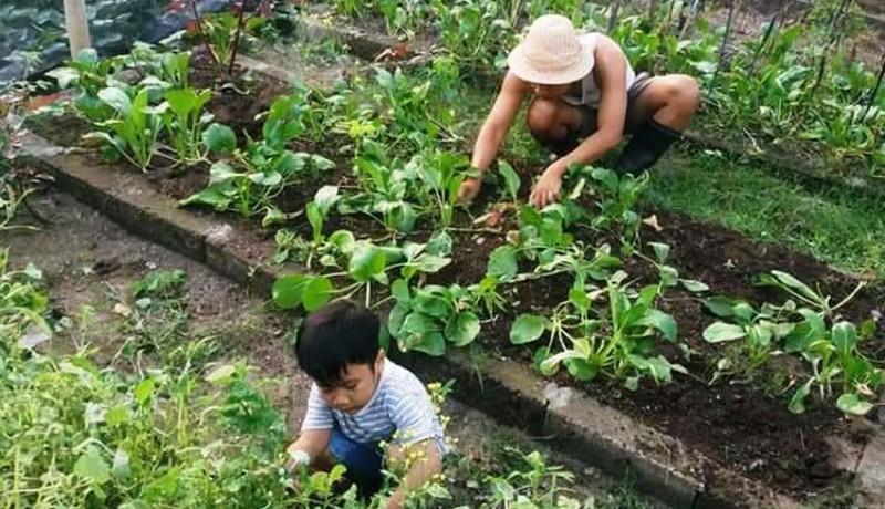 www.nusabali.com-perkuat-lumbung-pangan-keluarga