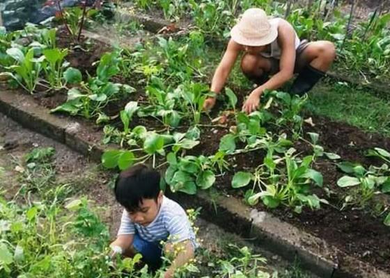 Nusabali.com - perkuat-lumbung-pangan-keluarga