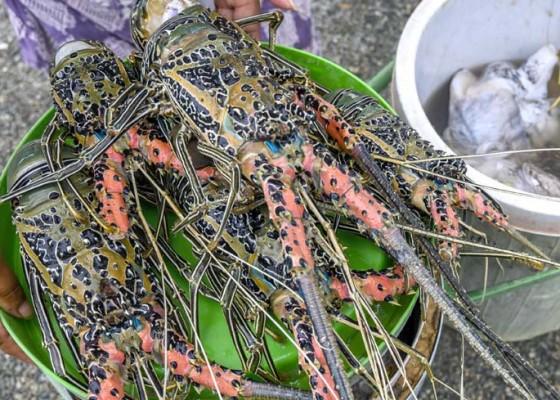Nusabali.com - nelayan-serangan-siap-hidupkan-keramba