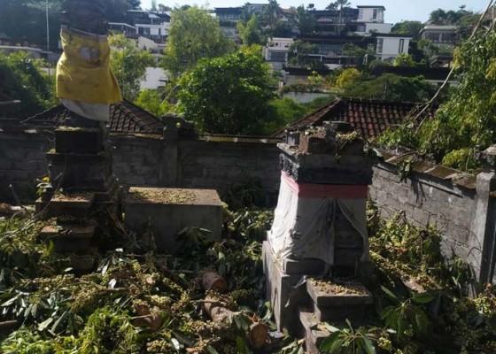 Nusabali.com - angin-kencang-pohon-perindang-tumbang-timpa-dua-palinggih