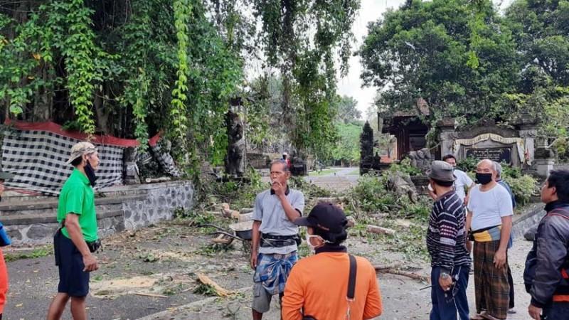 www.nusabali.com-hujan-sehari-3-pohon-tumbang